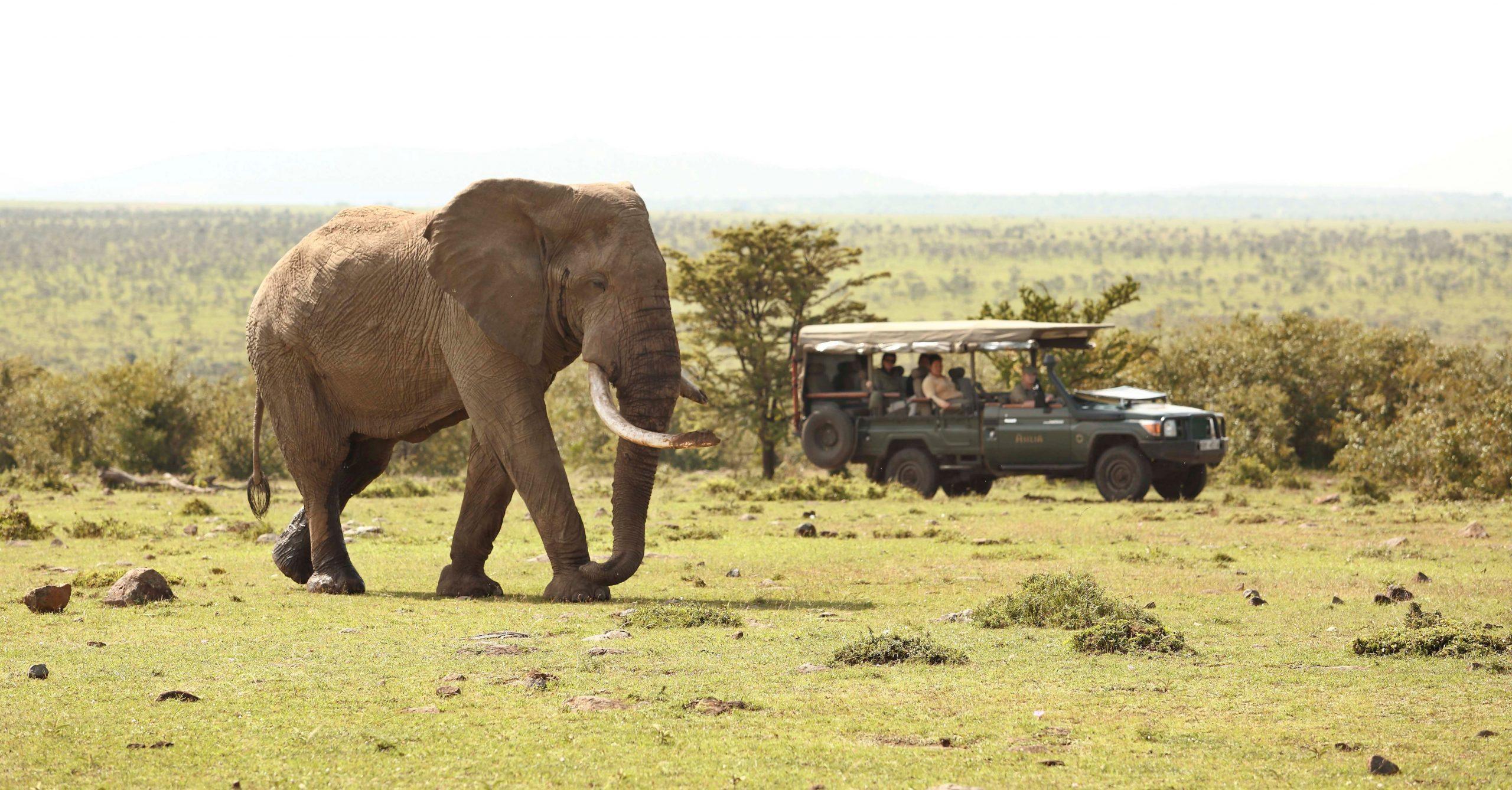 Encounter Mara Game Drive