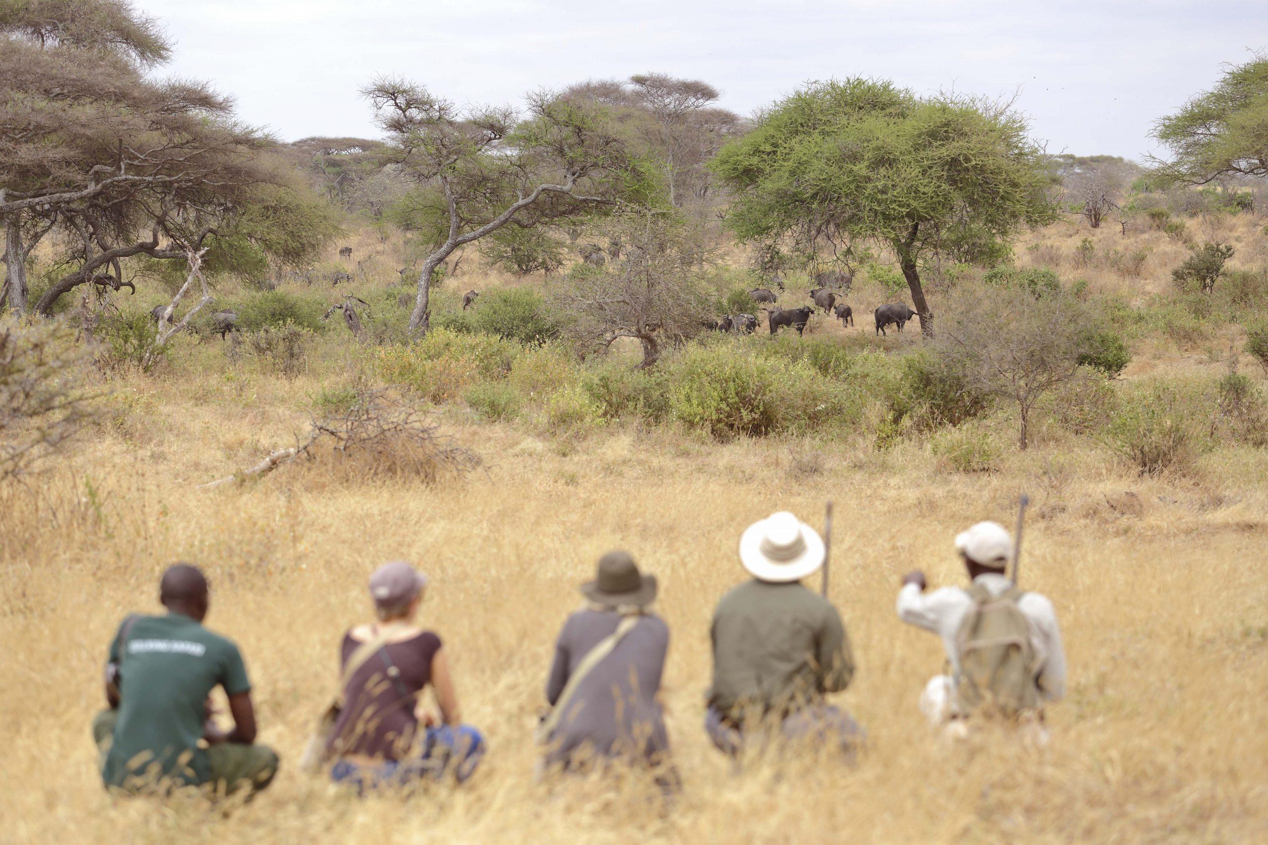 Olivers - Walking Safari - Asilia